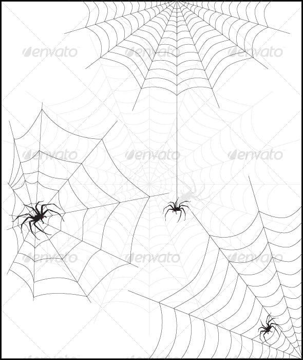 spider web & spider